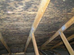 schimmel dachboden entfernen