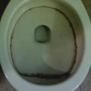 Schimmel an Toilettensitzen, Schüsseln und Spülkästen entfernen