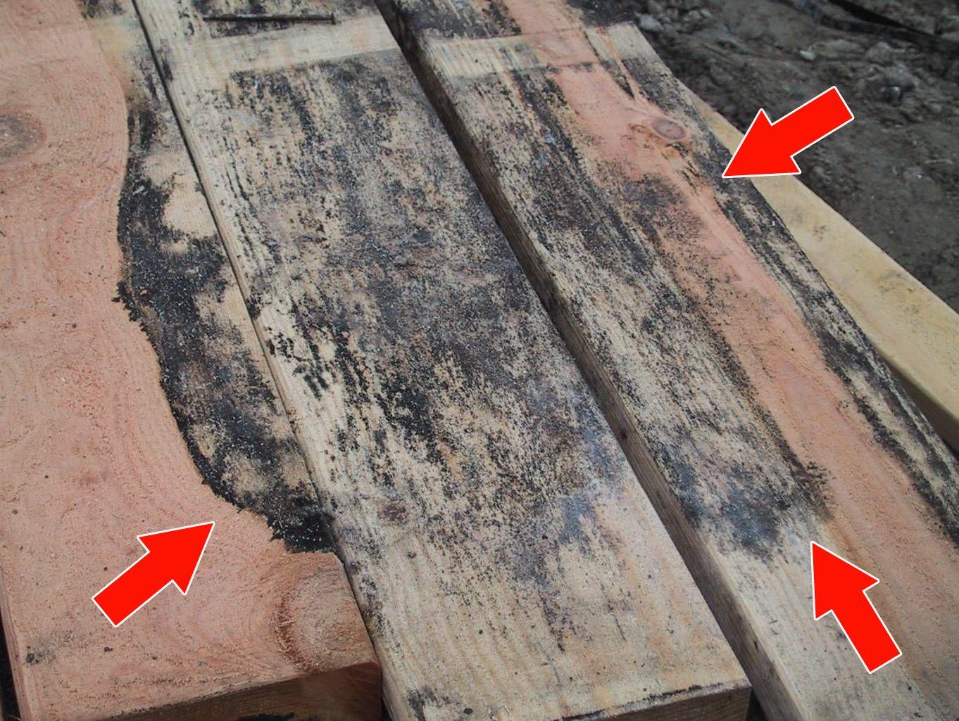 schwarzer schimmel auf holz entfernen und befreien