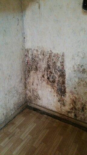 Schimmel an der Wand entfernen